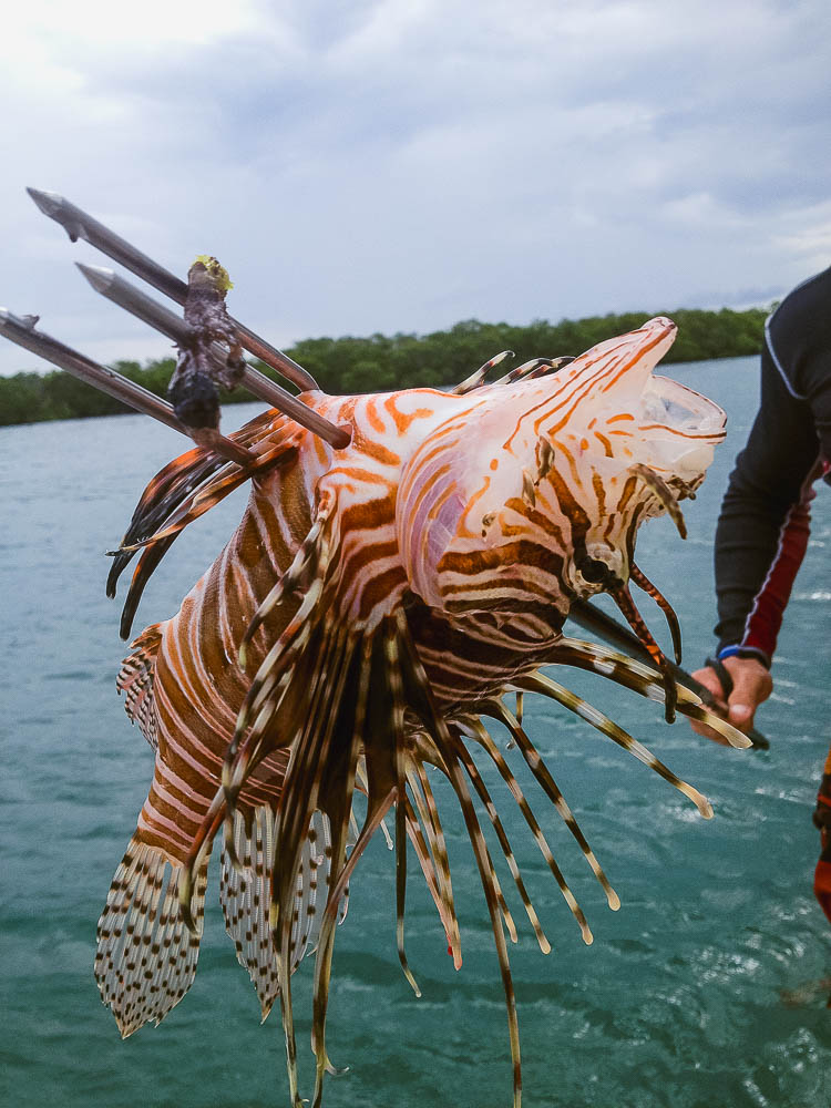Rufus, our Lion Fish wrangler