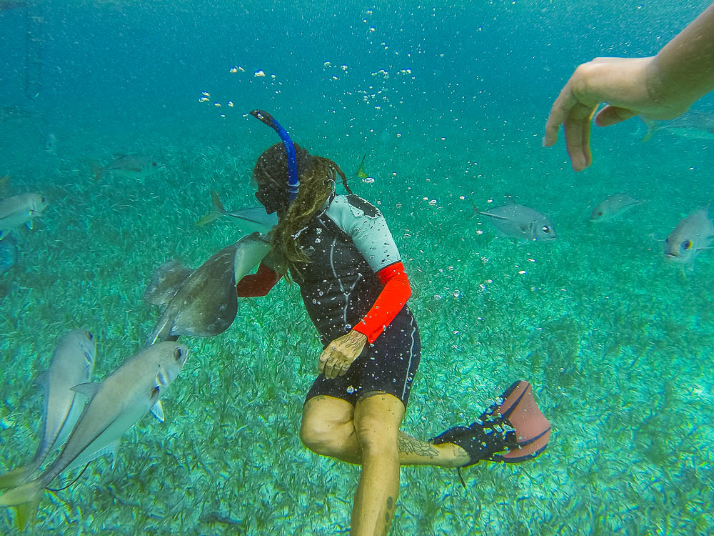 our guide, Ally, interacting with one of the rays - they know her well and greet her personally whenever she gets in the water