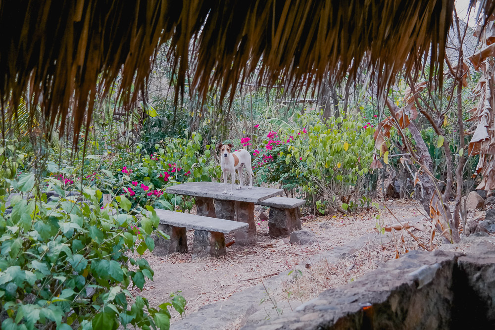 the local watch dog outside our cabana